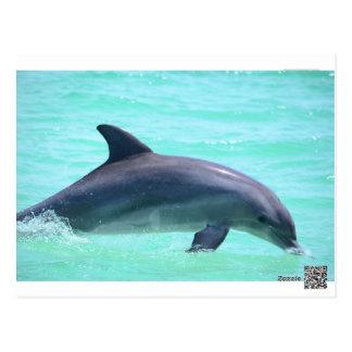 delfínes postal