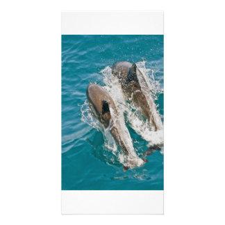 Delfínes que nadan libremente en el Océano Pacífic Tarjeta Fotografica