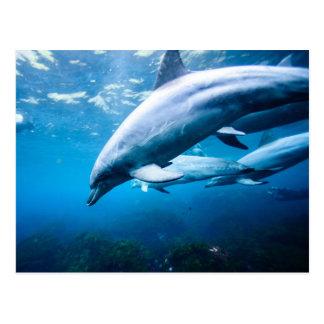 Delfínes subacuáticos postal