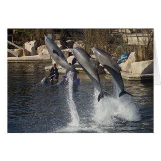Delfínes Tarjetón