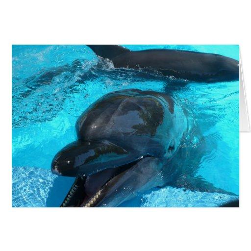 Delfínes Tarjeta