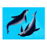 Delfines Tarjeta Postal