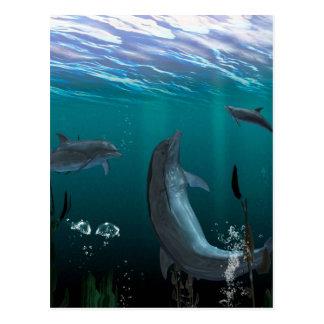 delfínes tarjetas postales