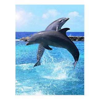 Delfínes Postales