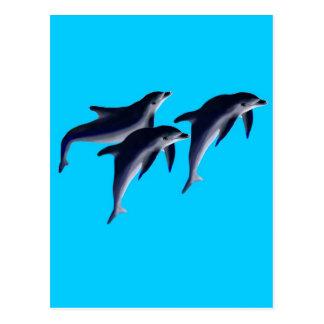 Delfines Postales