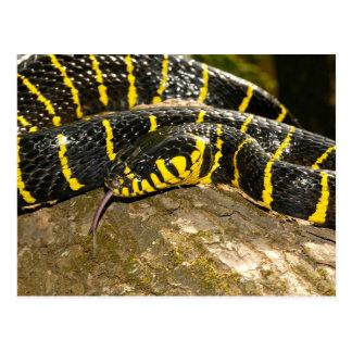 Dendrophila de Boiga o serpiente del mangle Postal