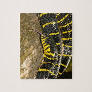 Dendrophila de Boiga o serpiente del mangle Puzzle