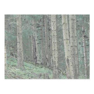 Dentro de un bosque spruce postal