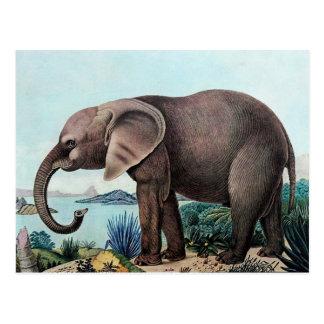Der Afrikanische Elefant o el elefante africano Postal