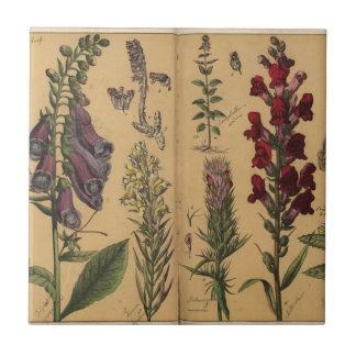DES Pflanzenreichs, Eßlingen 1870 de Azulejo Cuadrado Pequeño