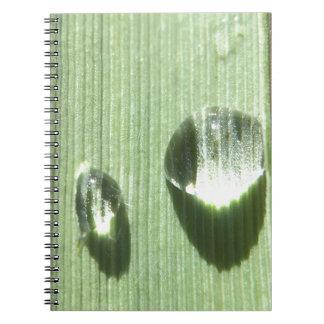 Descensos de rocío cuaderno