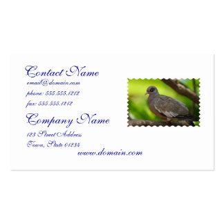 Descubra la paloma observada plantillas de tarjeta de negocio