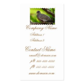Descubra la paloma observada tarjetas personales