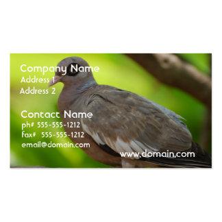 Descubra la paloma observada tarjeta de visita