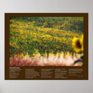 Desiderátums - campos del girasol en sol