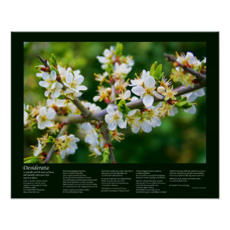Desiderátums - espino Sun-Dappled de la primavera Posters