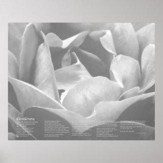 Desiderátums - textura del satén subió en blanco y posters