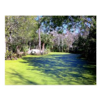 Desierto del río de la Florida Postal