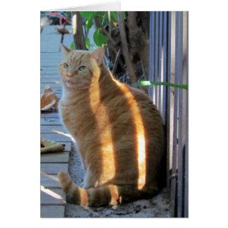 Deslumbramiento soleado del gato gordo:) tarjeta de felicitación