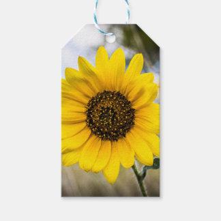 Deslumbramiento soleado etiquetas para regalos