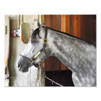 Destin - asilo del caballo foto
