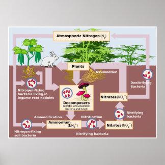 Diagrama del ciclo del nitrógeno de la tierra póster