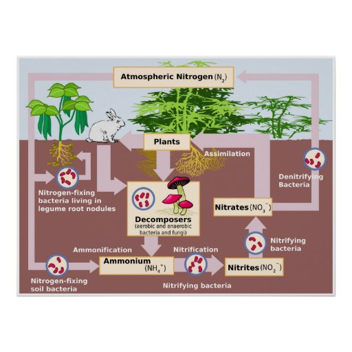 Diagrama del ciclo del nitrógeno de la tierra impresiones