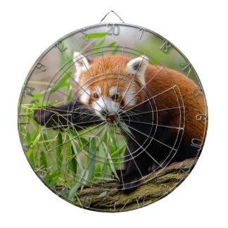 Diana Panda roja que come la hoja verde