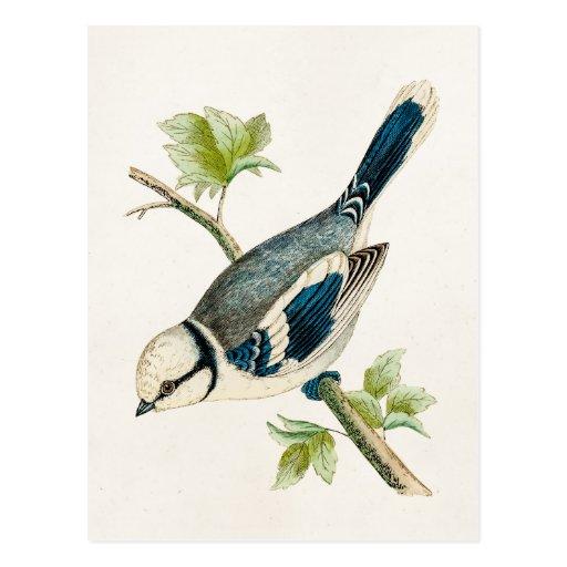 Dibujo azul de los pájaros del pájaro cantante del postales