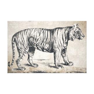 Dibujo blanco y negro de la mano del tigre de la lienzo