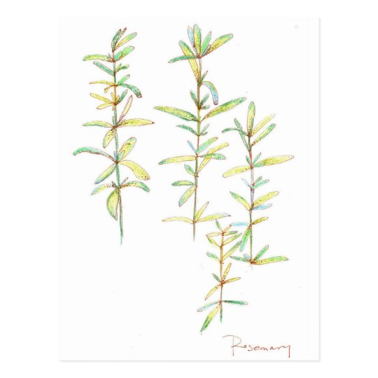 Dibujo botánico del arte de la planta herbaria de postal