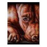Dibujo de la cara del pitbull de Brown del perro Postal