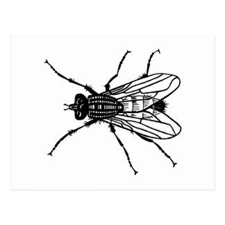 Dibujo de la mosca - el insecto, parásito, vuela postal