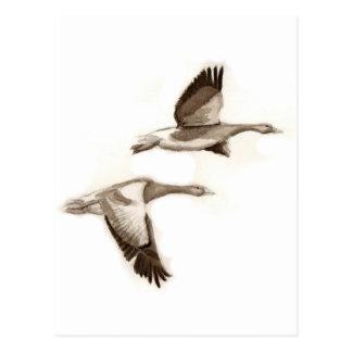 Dibujo de los gansos del vuelo postal