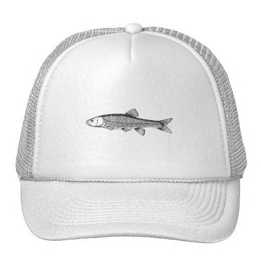 Dibujo de los pescados del cacho gorra