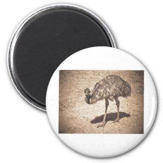 Dibujo del Emu Imán De Nevera