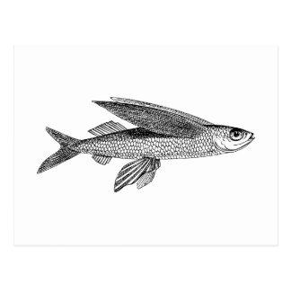 Dibujo del vintage del pez volador postal