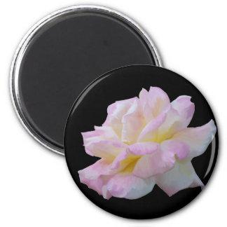 Dibujo digital color de rosa imanes