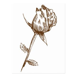 Dibujo subió capullo de rosa postal