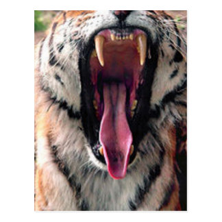 Dientes del transporte del tigre postal