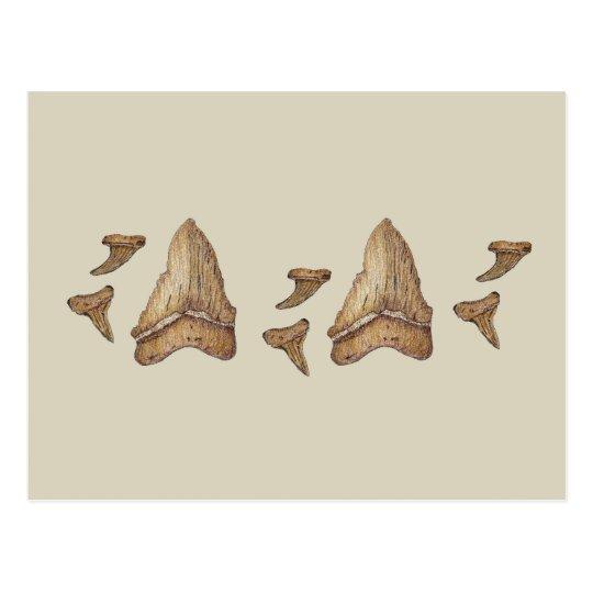 Dientes fósiles del tiburón postal