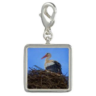 Dije Con Foto Cigüeña blanca europea, ciconia, en la jerarquía