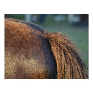 diseño animal equino del caballo de potro del lado tarjeton