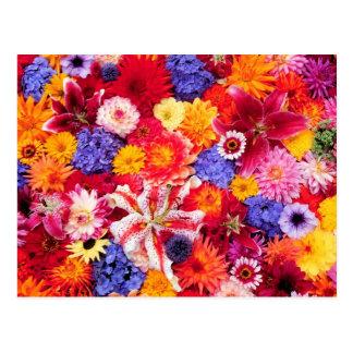 Diseño floral de Dalhia, lirios orientales, Tarjetas Postales