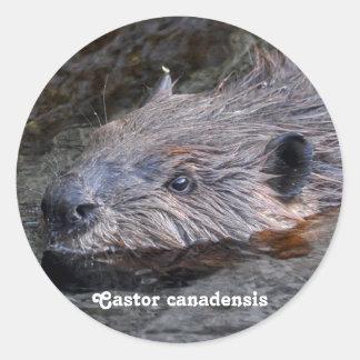 Diseño hermoso de la fauna para el Animal-amante Etiqueta Redonda