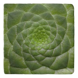 diseño verde del espiral del modelo de la hoja salvamanteles