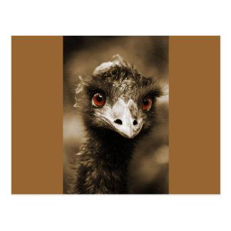 Diversión de la avestruz postal