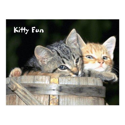 Diversión del gatito postal