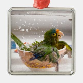 Diversión del tiempo del baño del loro ornamentos de navidad