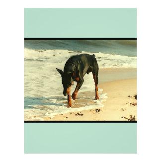 Doberman en la imagen de la pintura de la playa folleto 21,6 x 28 cm